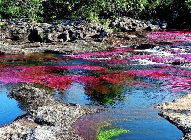 Caño Cristales, Colombia (Foto: El Tiempo/ Reprodução)