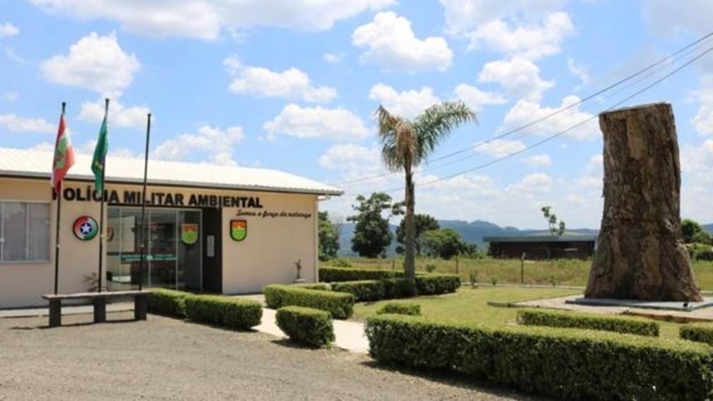 Árvore exposta pela Polícia Militar Ambiental de SC na cidade de Joaçaba para fins educativos — Foto: Polícia Militar Ambiental de SC