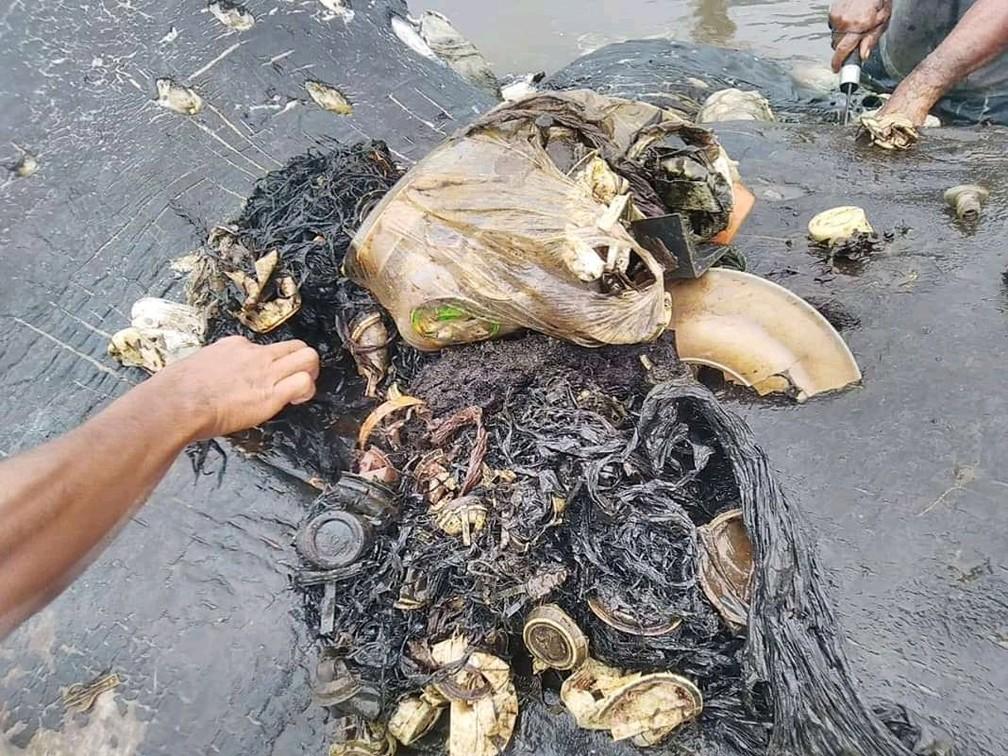Fragmentos plásticos encontrados no estômago de baleia morta na Indonédia — Foto: Reuters