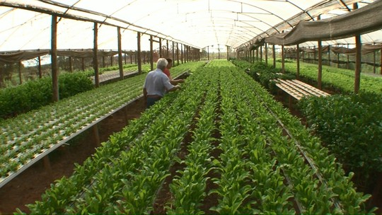 Hidroponia aumenta renda de pequenos produtores rurais no Paraná