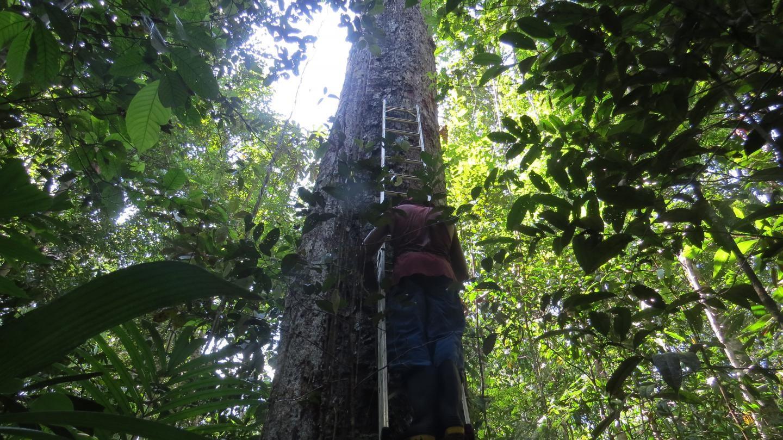 Aquecimento global afeta crescimento e regeneração da floresta Amazônica, diz estudo