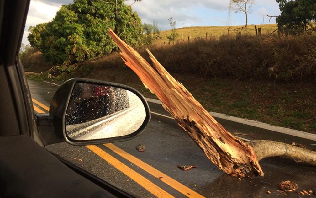 Vento arranca e derruba árvores às margens da BR-459, em Pouso Alegre (Foto: Reprodução Redes Sociais)