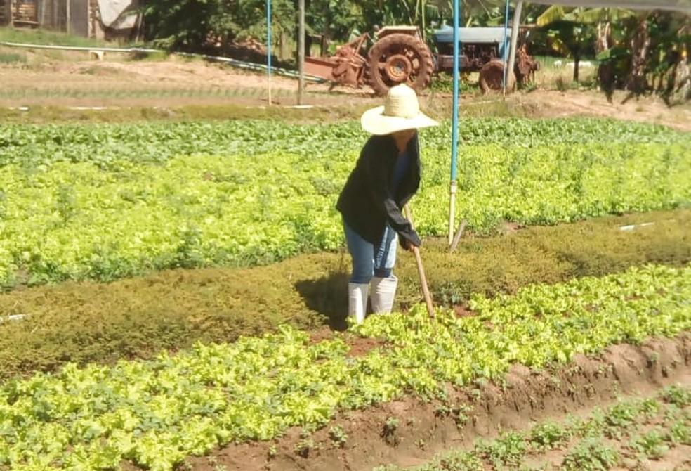 Akico trabalha na produção de hortaliças — Foto: Cedida