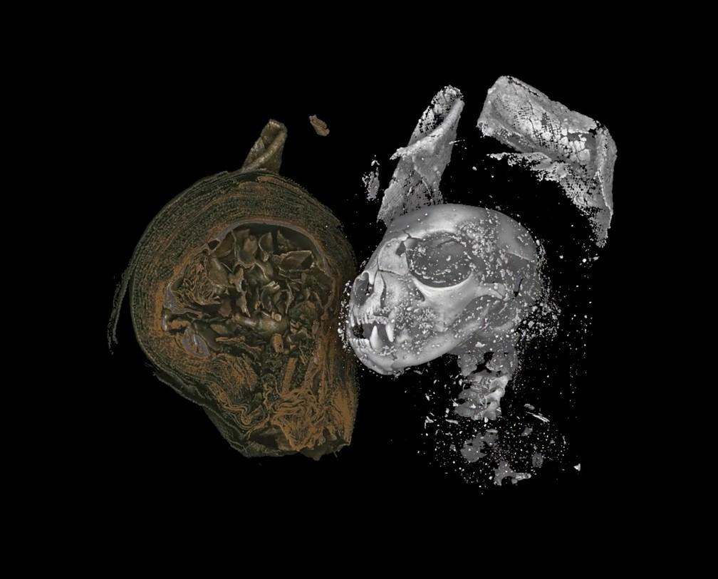 Imagem em alta resolução mostra interior em 3D de um gato mumificado no Egito Antigo, há mais de 2 mil anos. — Foto: Swansea University