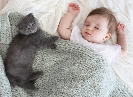 Pode deixar o gato ou o cachorro dormir na mesma cama que o bebê?