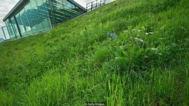 Gramado no terraço dos prédios pode ajudar a formar um 'corredor verde' conectando reservas e parques maiores (Foto: MAXVIS via BBC)