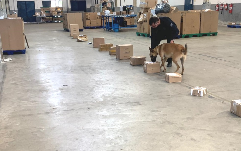 Cão farejador ajudou PF a encontrar droga em caixa enviada do Acre para o Rio Grande do Norte pelos Correios. — Foto: PF/Divulgação