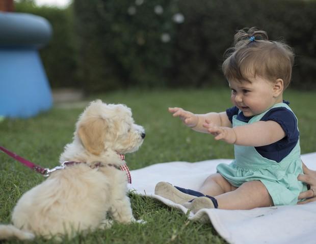 Lares brasileiros têm mais cachorros do que crianças (Foto: Thinkstock)