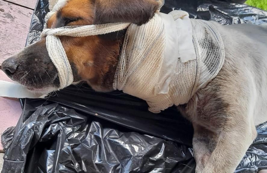 Cão abandonado em ilha que sofre com avanço do mar é resgatado por dupla em 2 dias de viagem