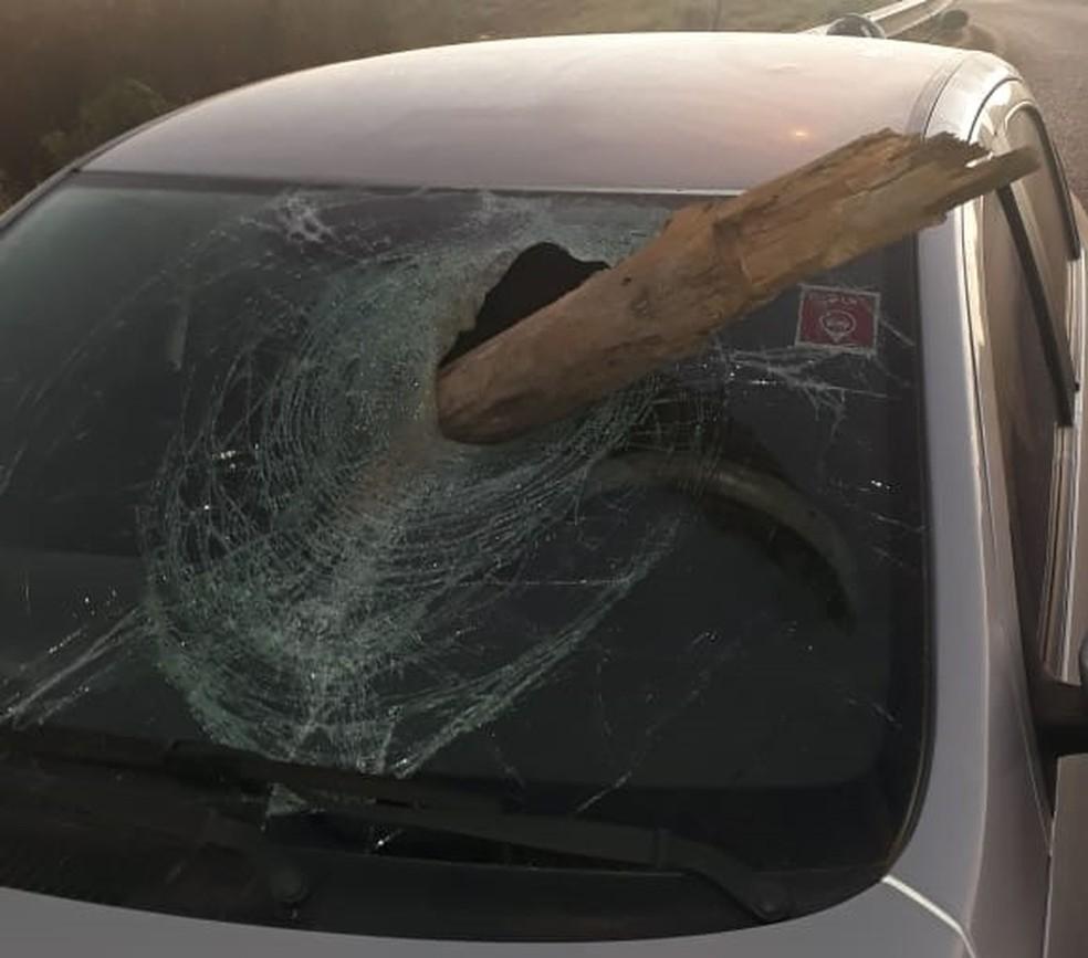 Pedaço de madeira atravessou para-brisa do veículo que ficou completamente destruído.  — Foto: Arquivo pessoal