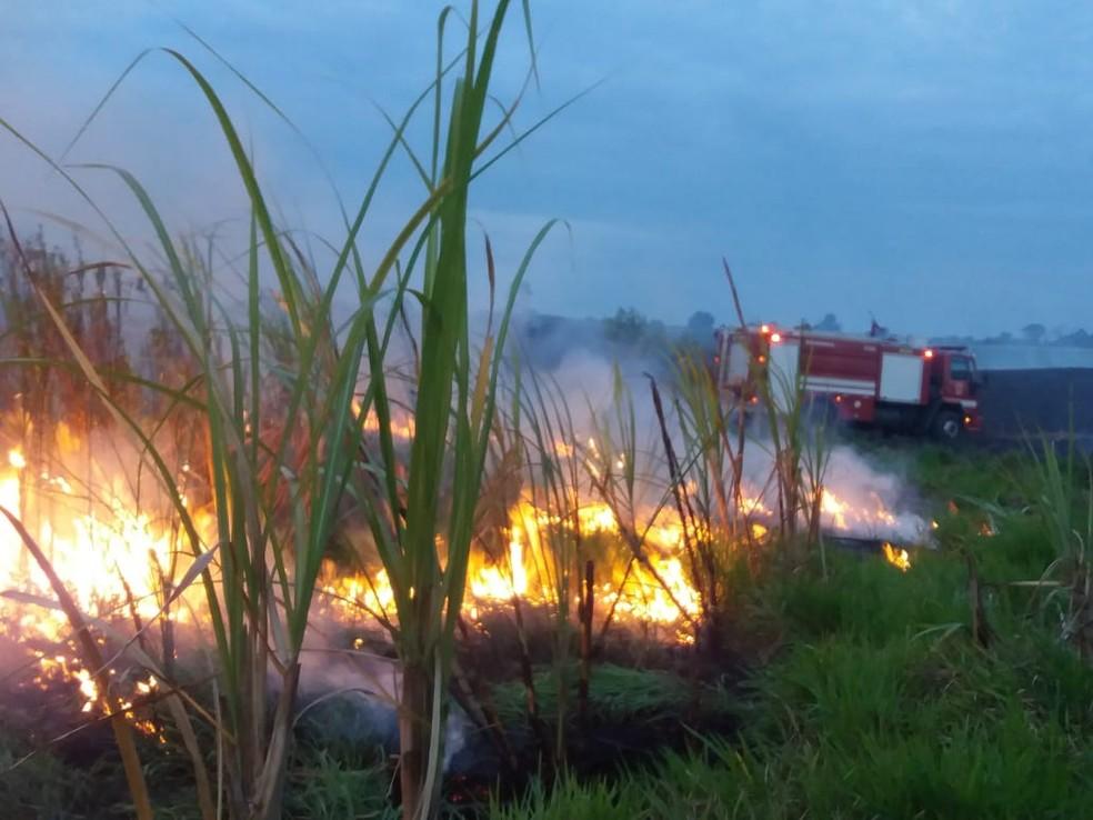 Plantação de cana e área de preservação pegam fogo em Cerqueira César  — Foto: Corpo de Bombeiros/Divulgação