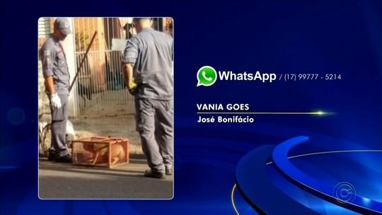 Raposa é capturada em banheiro de casa em José Bonifácio