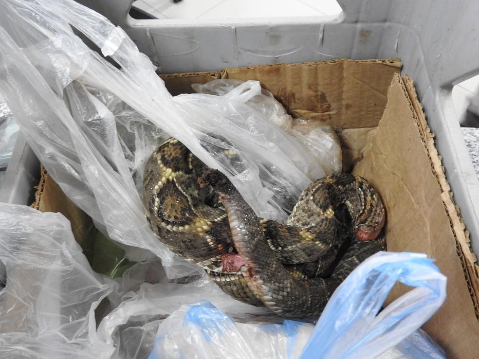 Parte das cobras estavam congeladas (Foto: Jackson Félix/G1 RR)