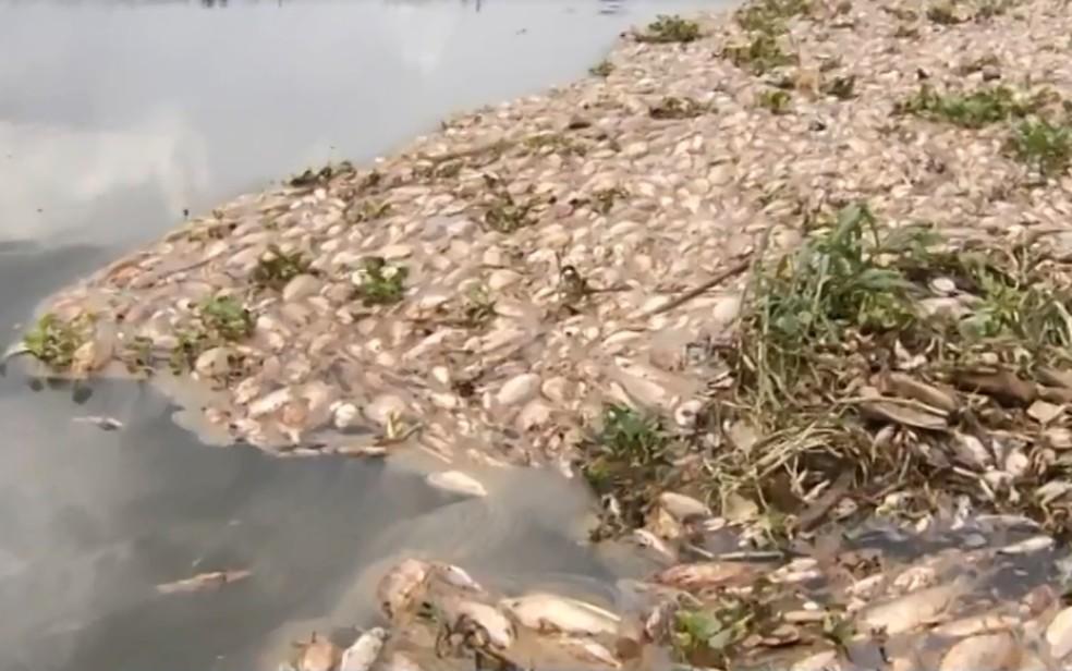 Laudo aponta baixa oxigenação da água como causa da morte de centenas de peixes no Rio Meia Ponte, em Piracanjuba — Foto: Reprodução/TV Anhanguera