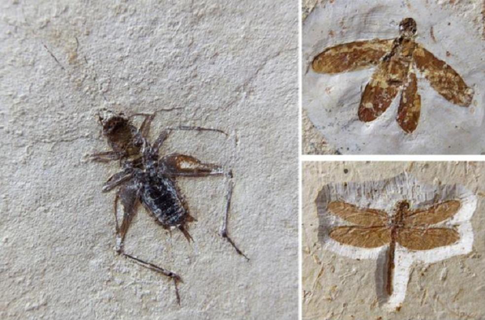 Fósseis achados no Ceará e contrabandeados na Europa são vendidos por até 100 mil euros — Foto: MPCE/Divulgação