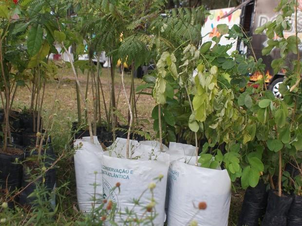Entre as espécies, estão o Ipê Roxo, Ipê Amarelo, Jacarandá e Jatobá, além de árvores frutíferas: jaca, graviola, pitanga e goiaba (Foto: Nádia Castro/Senar-PB)