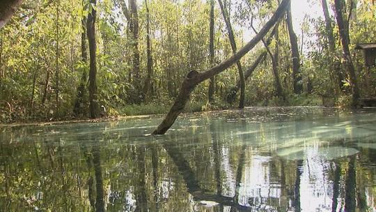 Brotas investe em reflorestamento e área verde aumenta mais de 500%