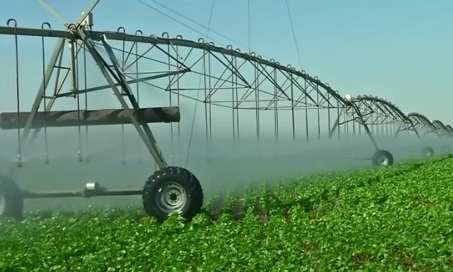 Com pivôs, produtores investem no cultivo de feijão irrigado durante período de seca em MT - Notícias - Plantão Diário