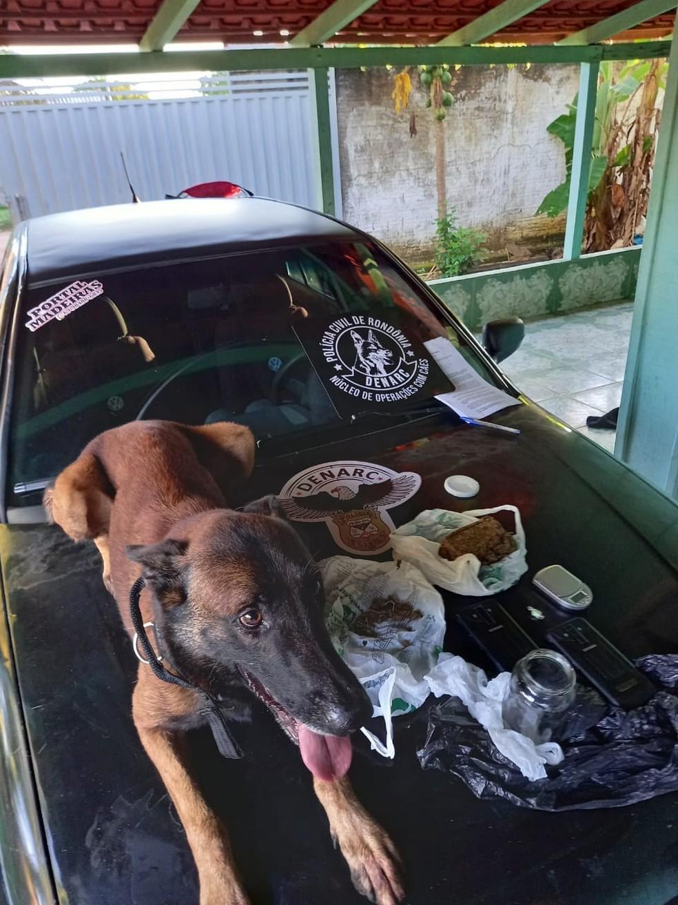 Polícia Civil apreende drogas em nova fase da operação  Exctasy — Foto: Divulgação
