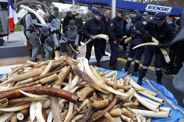 Agentes da alfândega observam presas de marfim antes da destruição do material (Fot Reuters/Charles Platiau)
