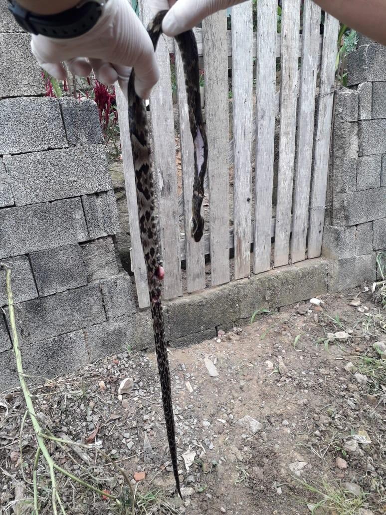 Idoso é picado por cobra durante roçada no Vale do Itajaí - Notícias - Plantão Diário