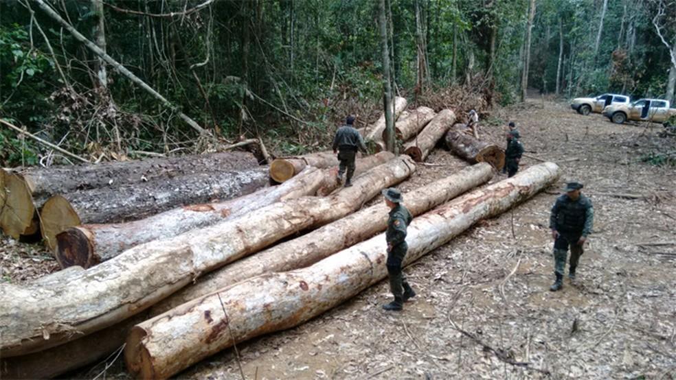 Flagrante de desmatamento em Mato Grosso — Foto: TCE-MT/ Divulgação