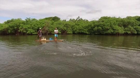 Proteção de mangues é fundamental para preservar fauna e flora