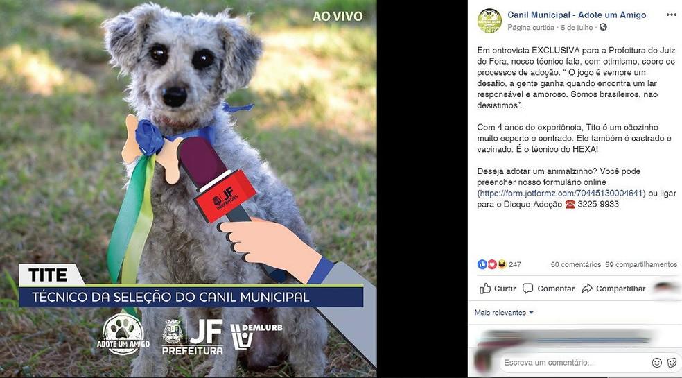 -  Divulgação de foto em campanha do Canil Municipal ajudou família de Juiz de Fora a reencontrar Estopinha  Foto: Reprodução/Facebook