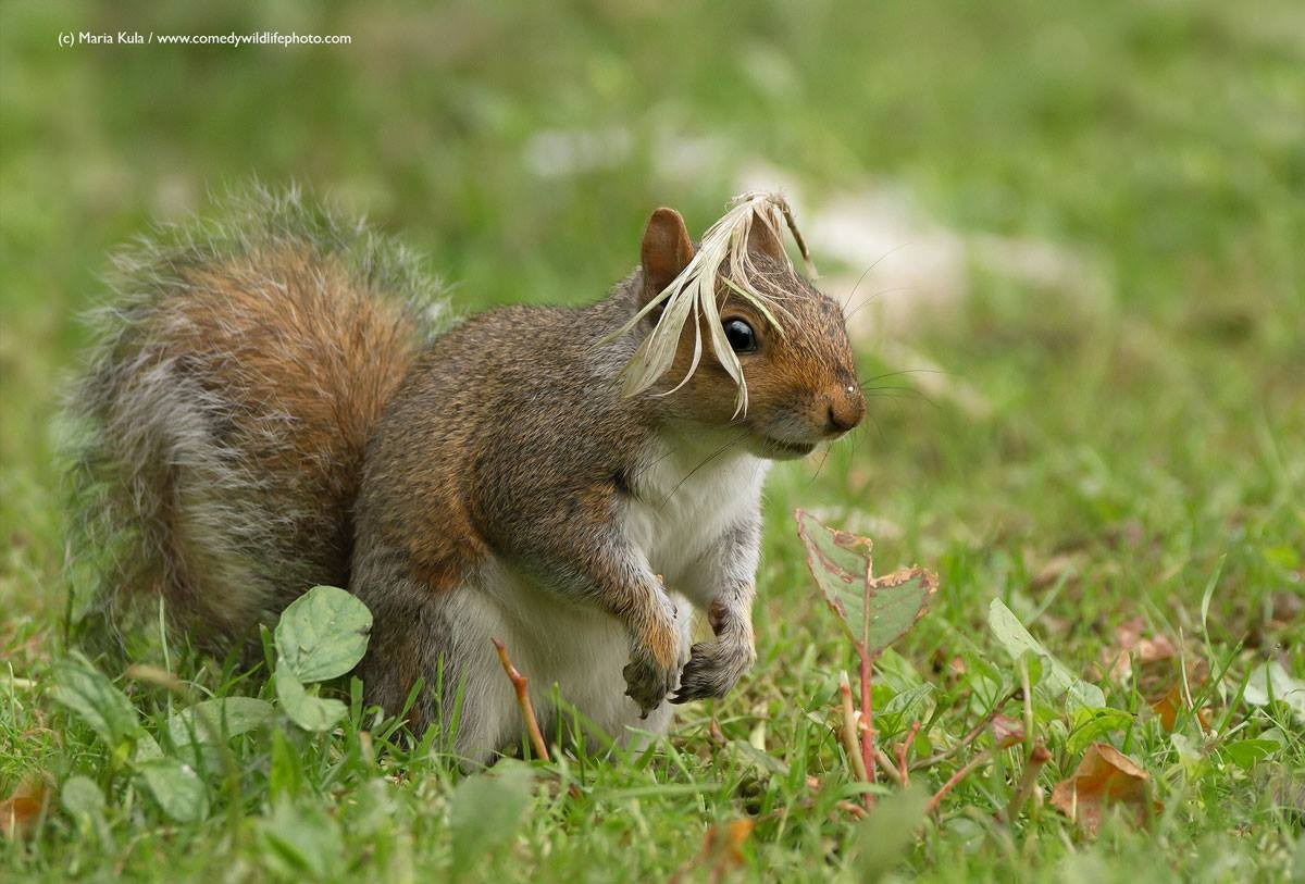 """""""Curtiu meu penteado?"""" (Foto: Maria Kula / Comedy Wildlife Photography Awards )"""
