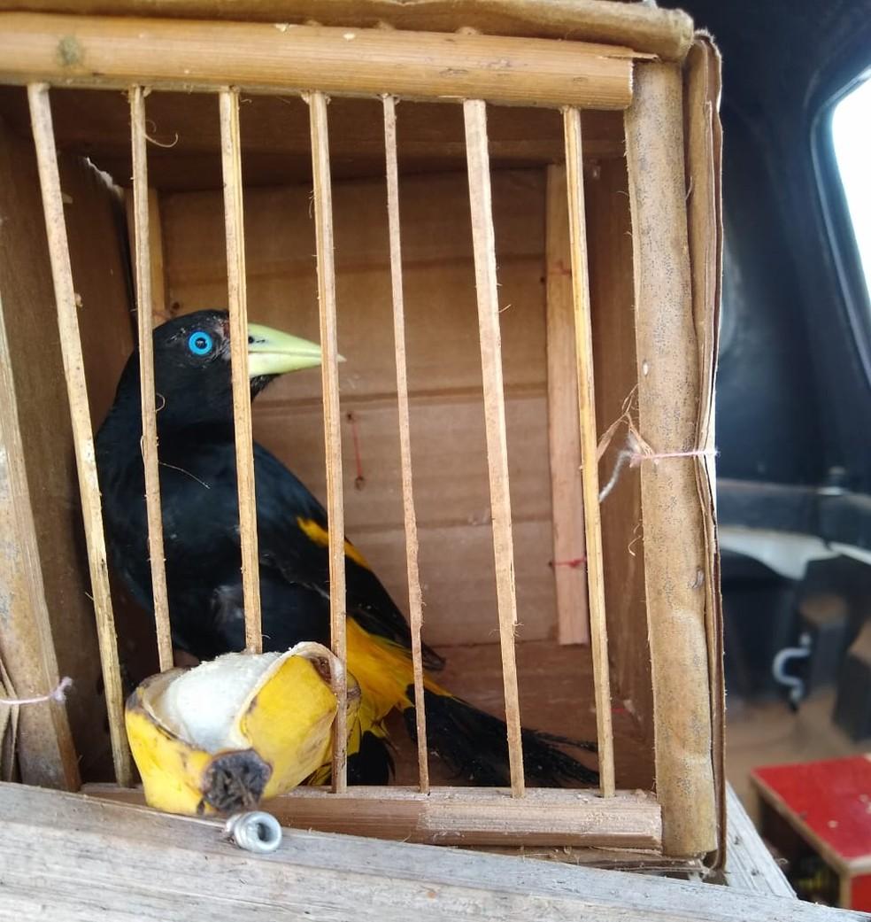 Pássaros resgatados pelo Ibama na cidade de Altos-PI foram soltos logo depois do resgate — Foto: Divulgação/ Ibama