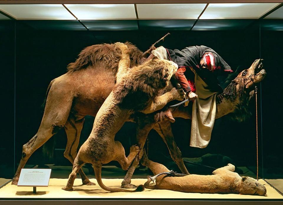 'Mensageiro Árabe Atacado por Leões'