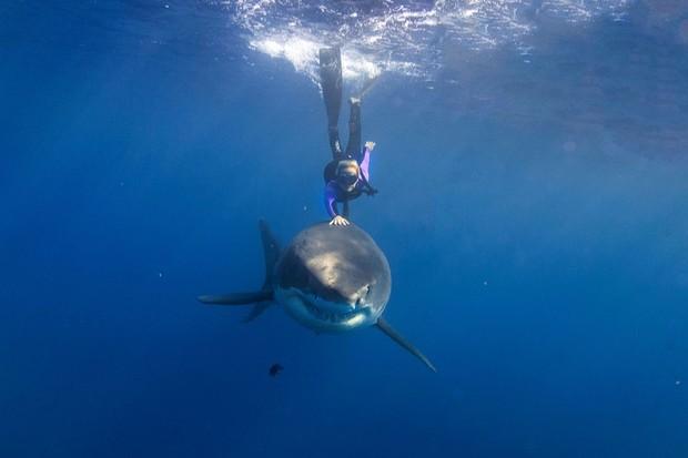 Ocean Ramsey e um tubarão branco (Foto: reprodução instagram (@oceanramsey)