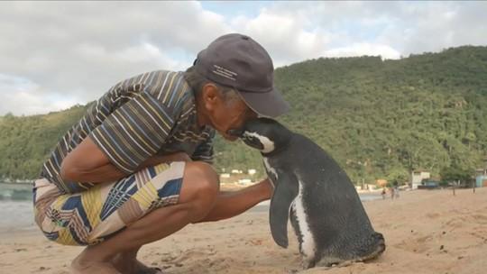 Pinguim voltou para visitar brasileiro por sete anos