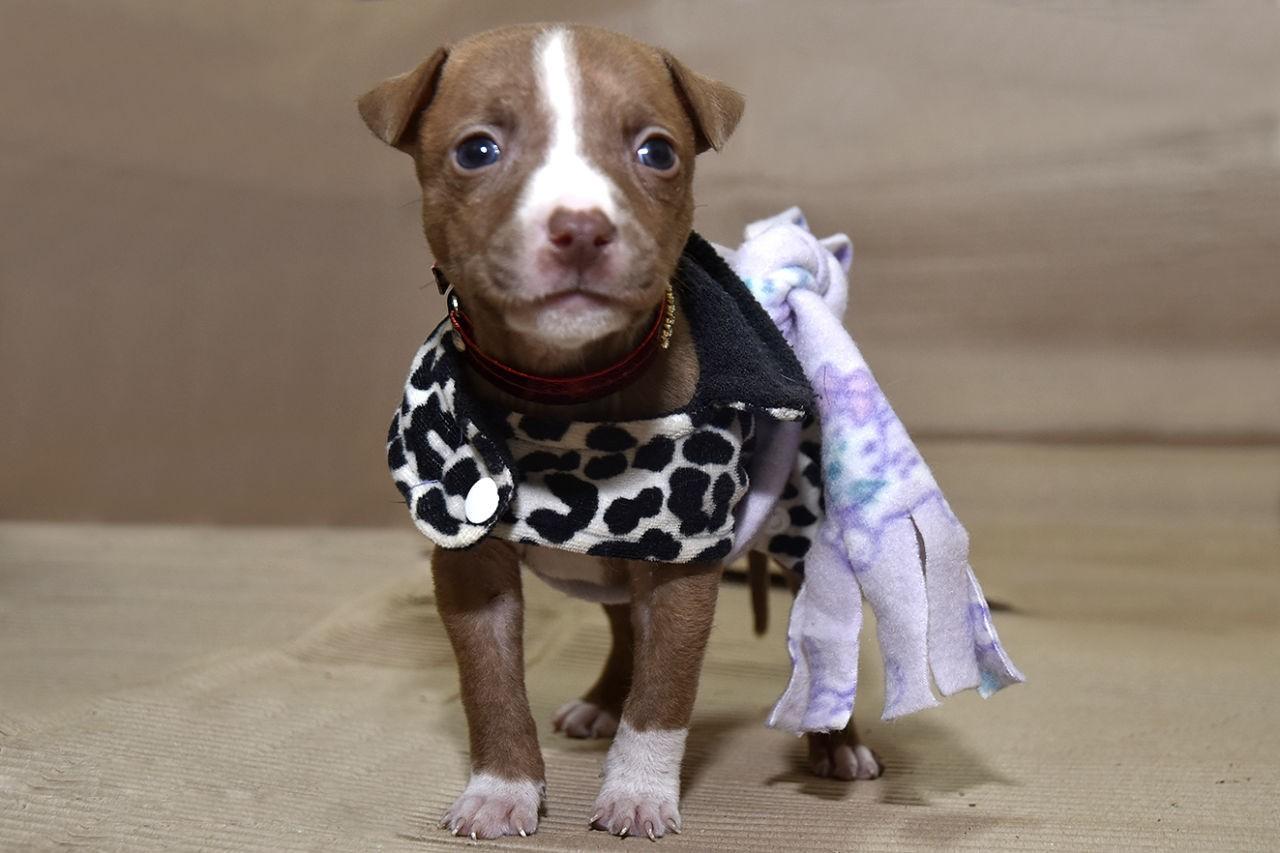 Campanha arrecada roupas e camas para cães e gatos em Jundiaí