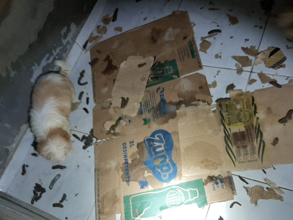 Cães são flagrados pela Polícia Militar em situação de insalubridade em casa na região de Vicente Pires, no DF  — Foto: PMDF/Divulgação