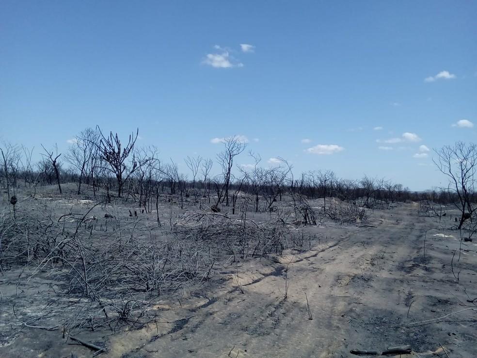 Incêndio em Pio IX foi controlado e voltou a atingir município nesta terça (5) — Foto: Divulgação/Corpo de Bombeiros