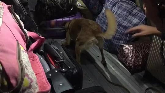 Drogas são encontradas em ônibus e duas são detidas na Via Dutra, em Piraí, RJ