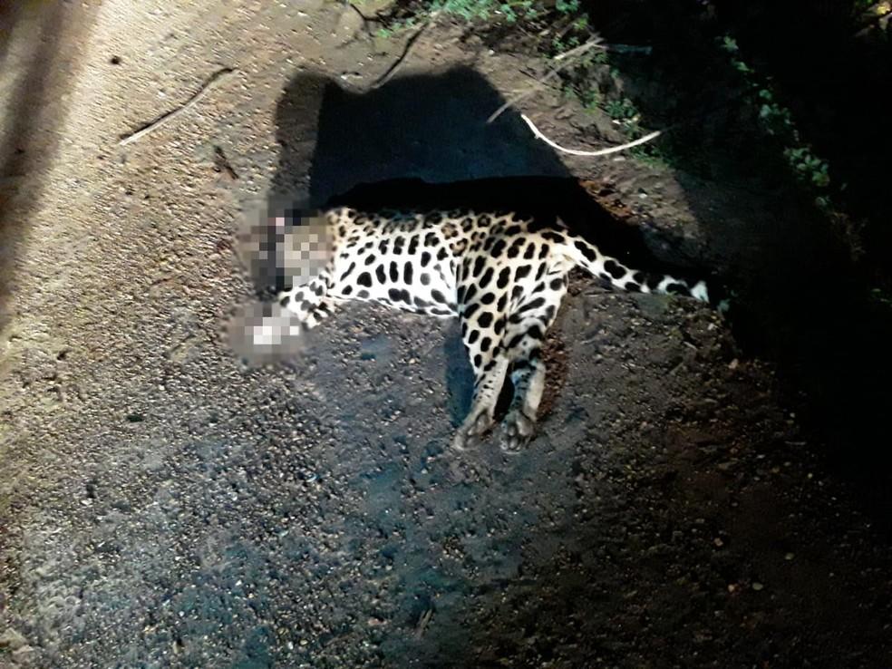 Animal estava jogado às margens da BR-210, no interior de Roraima — Foto: PM/Divulgação