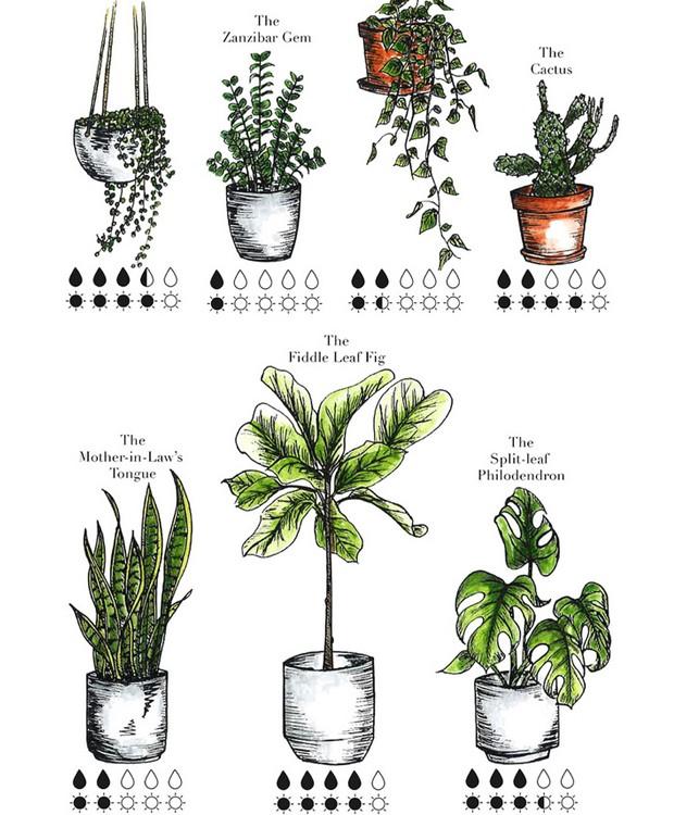 Cada planta precisa de uma determinada quantidade de luz e sol (Foto: A Pair & A Spair/ Reprodução)