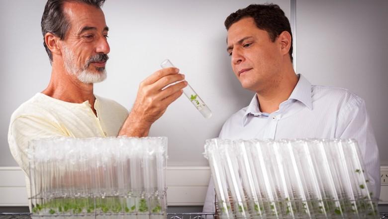 unicamp-entourage-cannabis-estudo (Foto: Divulgação/Entourage Phytolab)