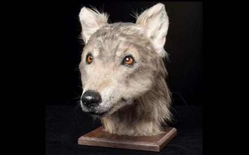 Tecnologia permite reconstruir rosto de cachorro que viveu há 4 mil anos