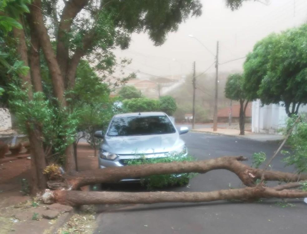 Em Borborema, ventania provocou a queda de árvores — Foto: Arquivo pessoal/Sandra Maria da Silva