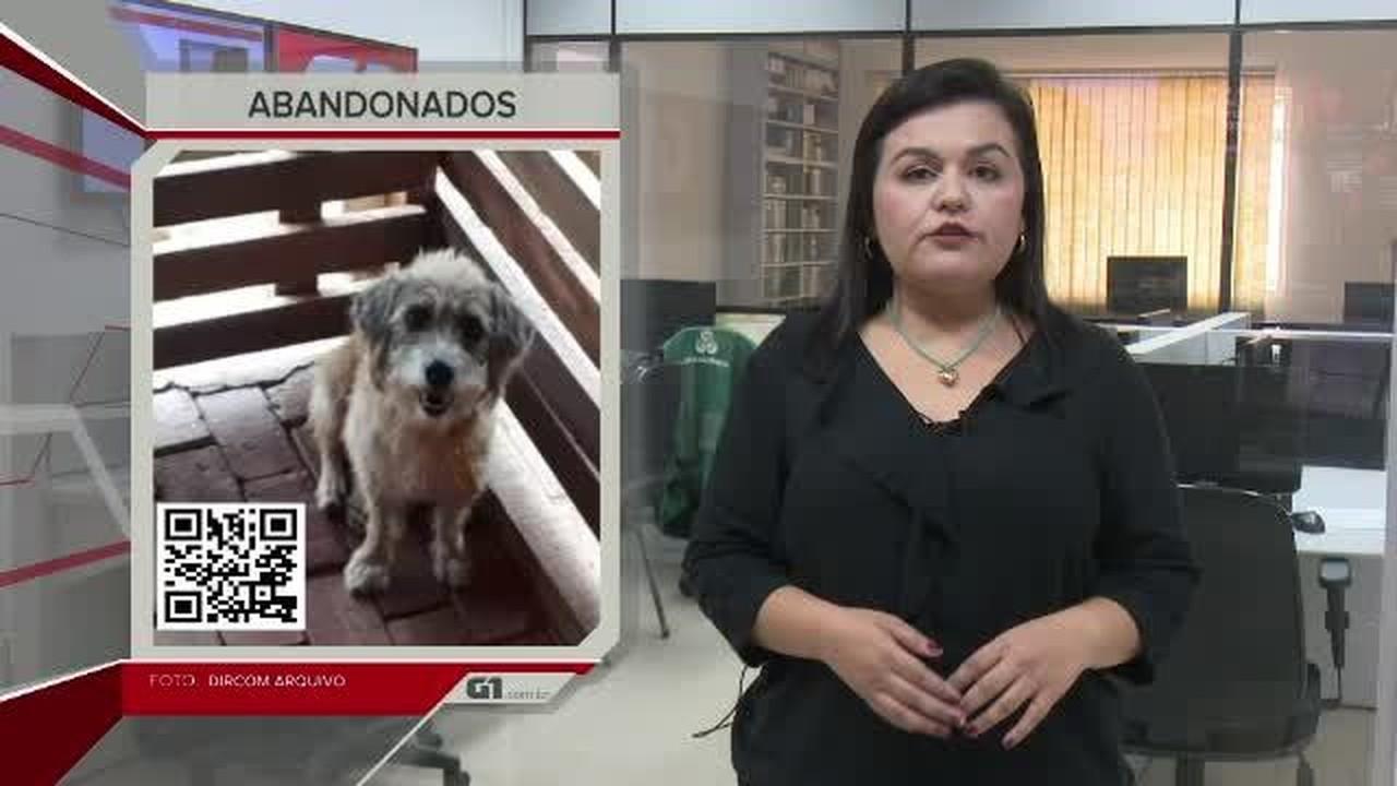 G1 em 1 Minuto - AC: Após enchente do Rio Acre, 20 cachorros aguardam donos em canil