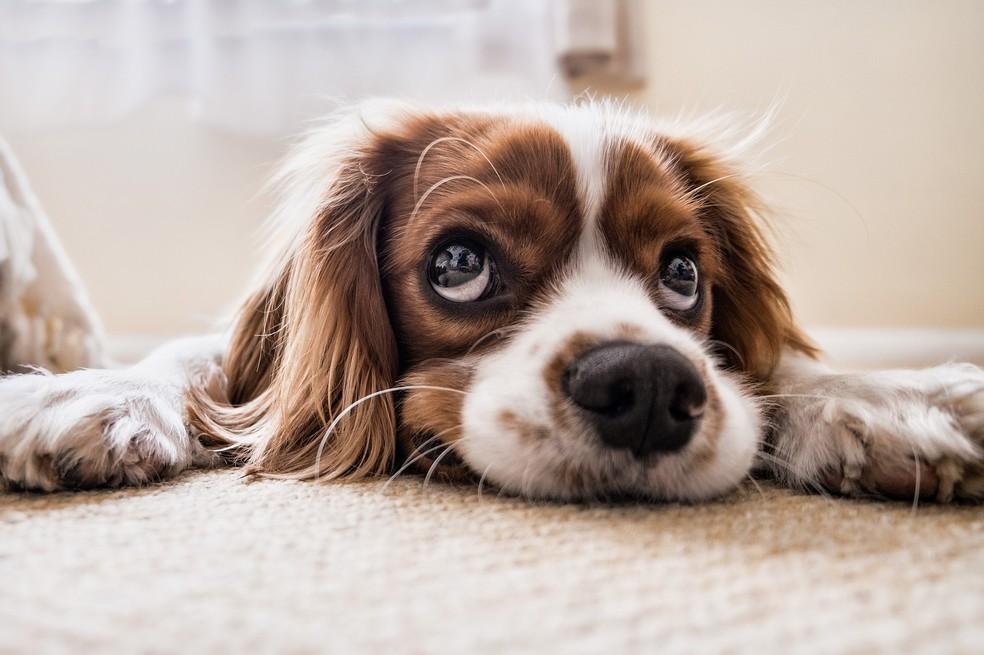 Ansiedade canina: saiba como o distúrbio pode afetar a saúde do ...