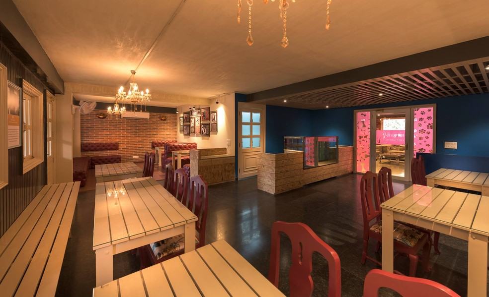 Cafeteria do hotel de luxo de para cães na Índia (Foto: Critterati/Divulgação)
