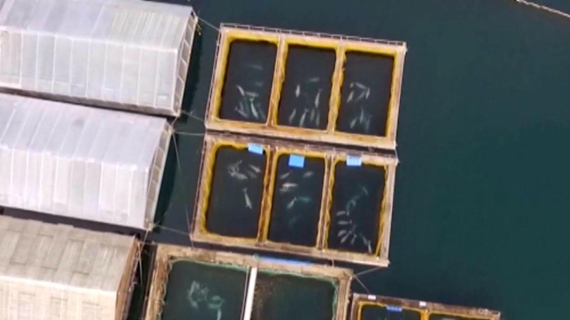 A prisão das baleias. (Foto: Reprodução / YouTube)