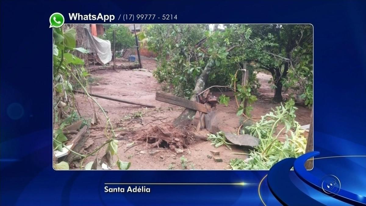 Vendaval destelha casas e causa queda de árvores em Santa Adélia