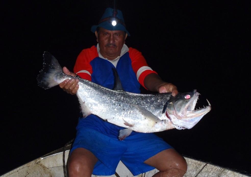 Estudo identificou maior presença de mercúrio em peixes carnívoros (Foto: Cecile Gama/Arquivo Pessoal)