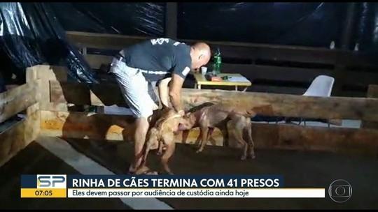 Voluntários de ONGs resgatam cães que participavam de 'rinha'