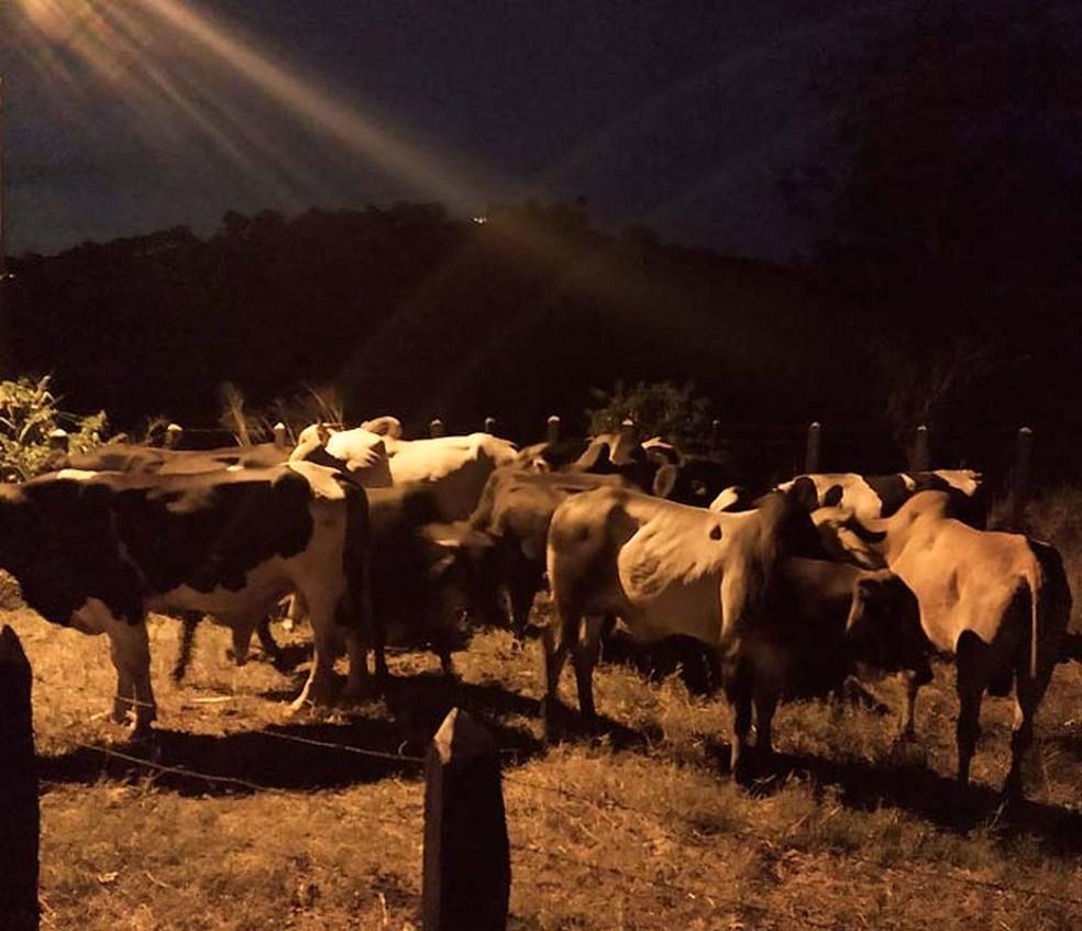Animais furtados que foram recuperados no interior da Bahia — Foto: Divulgação/SSP-BA